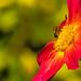 Busy Honeybee