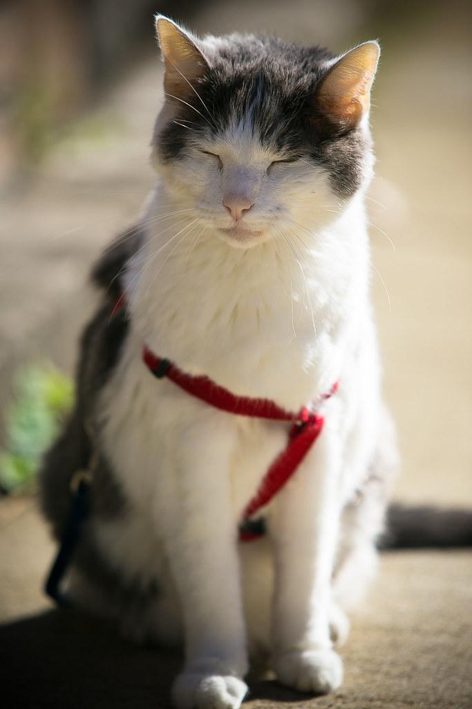 Rip Big Cat Avalon