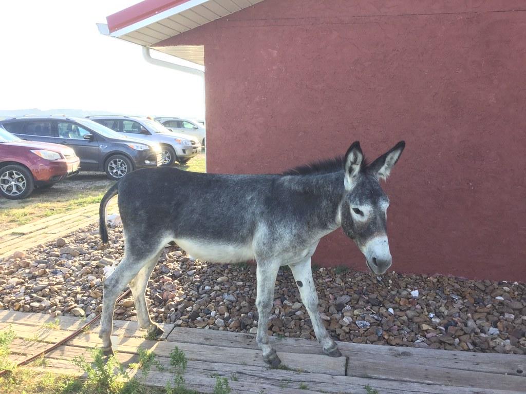 Half boy half donkey