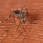 Basic Information on the Zika Virus