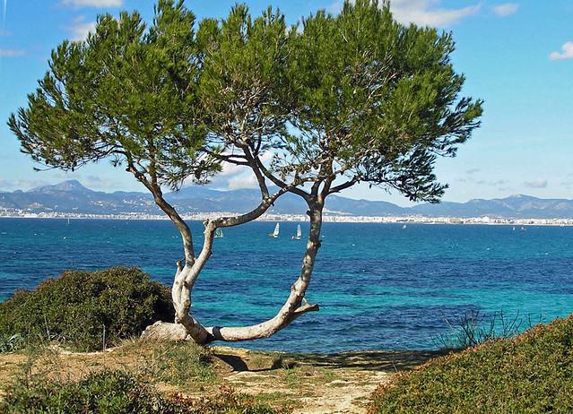 Hotel Mallorca Mit Eigenem Pool
