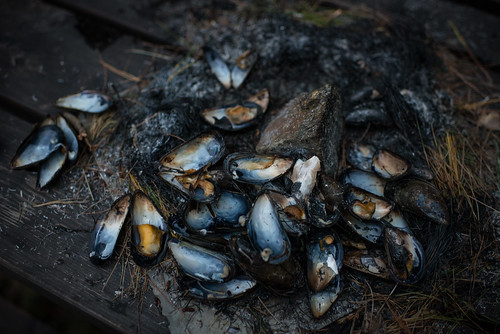 Mussel Shells | by goingslowly