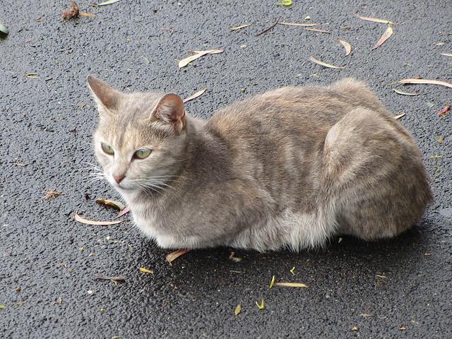 Hills Light Cat Food Offers