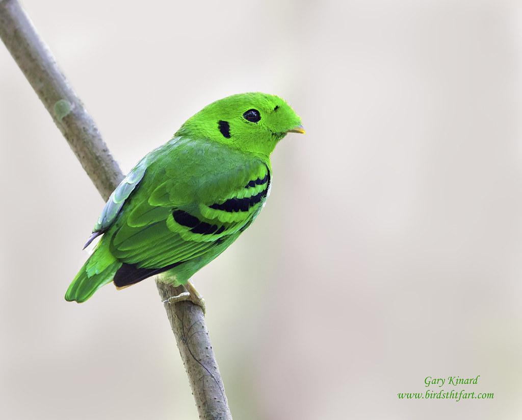 Free bird gape - 1 7