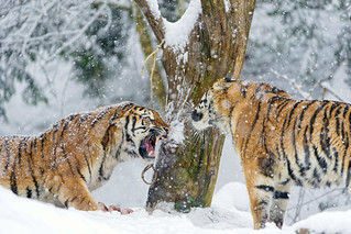 Argument between daugter and mother | by Tambako the Jaguar