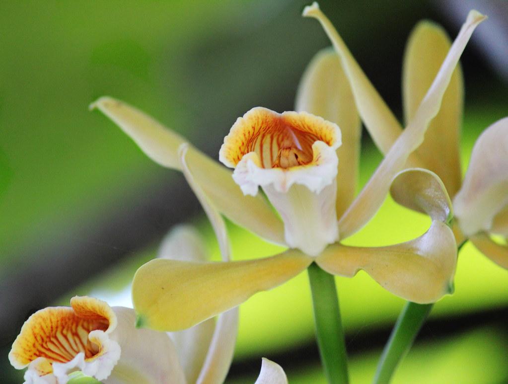 Feliz Aniversário Amiga: Orchids / Feliz Aniversário Querida Amiga Celisa (Tula