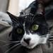 Magpie the Cat