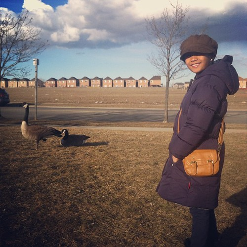 Canada goose (geese). Not the brand. Just the real things. In the suburbs. | by The Dafinator