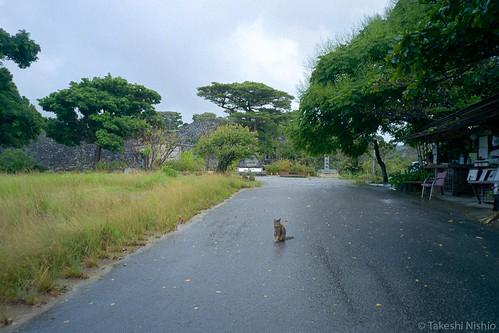 a cat sits wet road