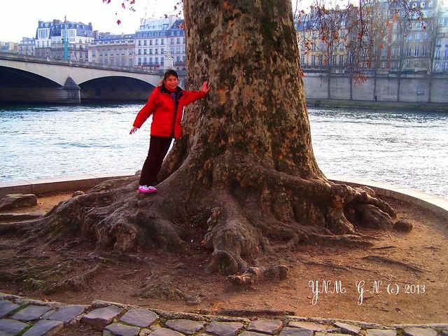 Arbres avant / aprés l'un des plus beaux arbres de paris: pourquoi