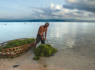 Seaweed Harvesting | by Terra_Tripper