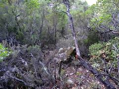 La trace dans la remontée vers le col rocheux avec le grand pin