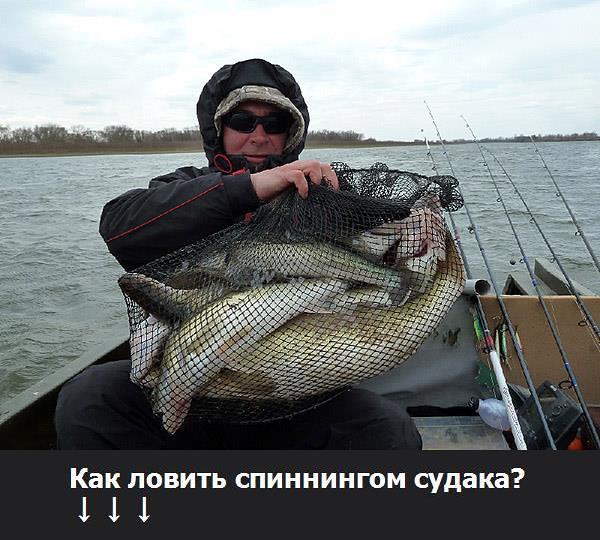 купить живца для рыбалки в спб приморский район