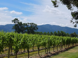 Cloudy Bay Vineyards | by clhendricksbc