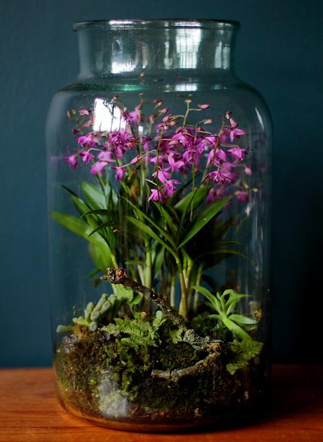 orchid terrarium flickr photo sharing. Black Bedroom Furniture Sets. Home Design Ideas