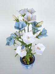 Origami bellflower original design each flower bud and flickr origami bellflower by leafpieceb mightylinksfo