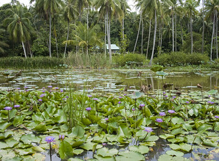 Kampong from the lily pond at Pulau Ubin | by wildsingapore