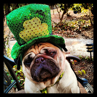 Apparently, anyone can be Irish for a day! | by geraldbrazell