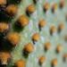 prickly.0253.jpg