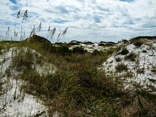 Grayton Beach State Park Campground