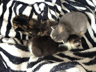 Mia's Kittens 1 | by Stephanie Booth