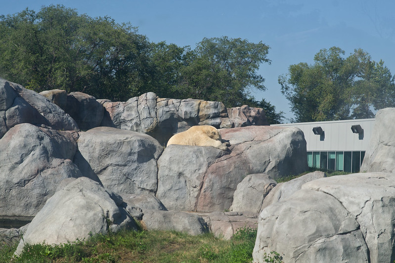 Sunbathing polar bear at Assiniboine Zoo, Winnipeg, Manitoba | packmeto.com
