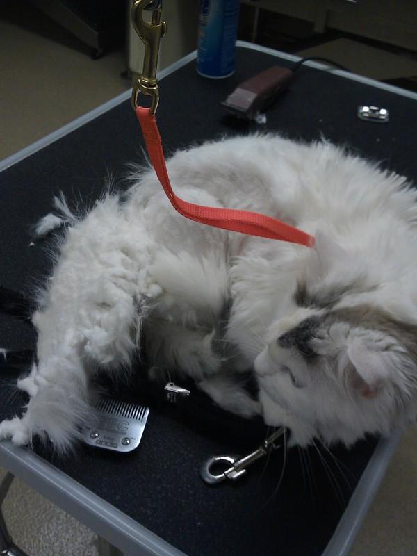 120206 LHS cat