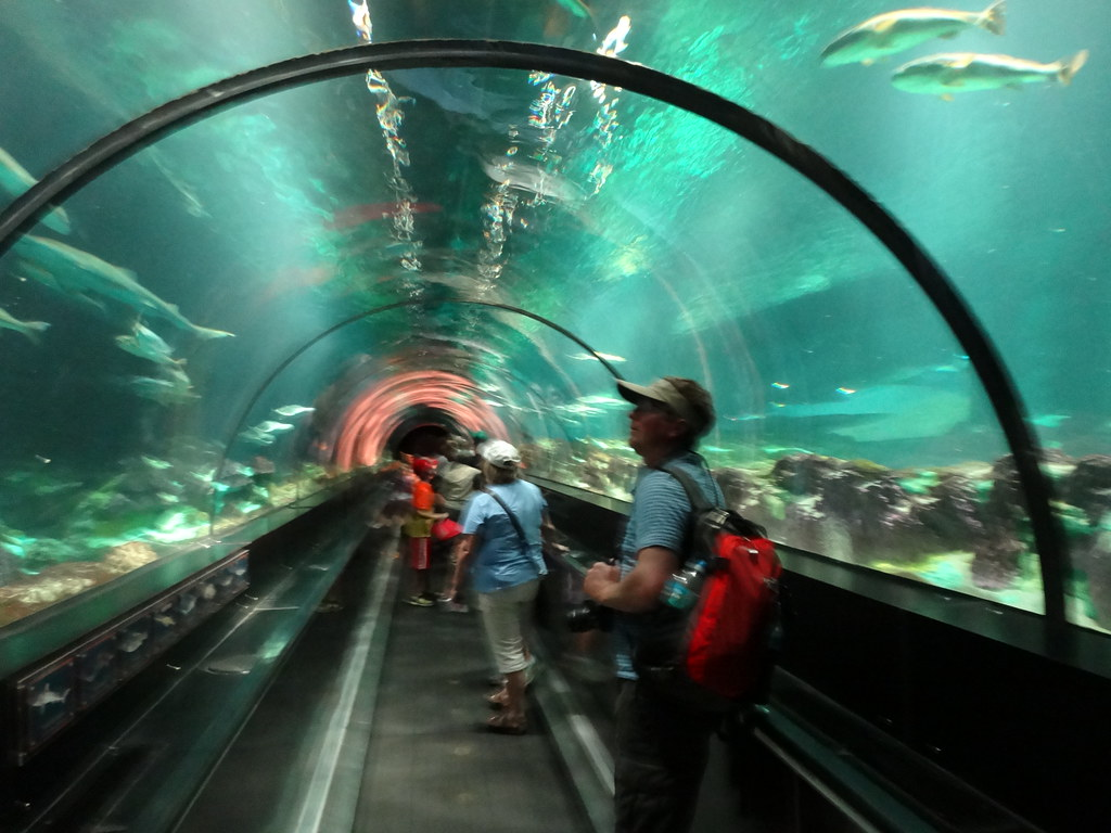 Aquarium Tunnel Seaworld Orlando Moving Walkway Passes