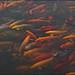Swan Lake / Lac des Cygnes