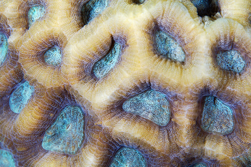 Red Sea Coral 10a | by Alexander Semenov