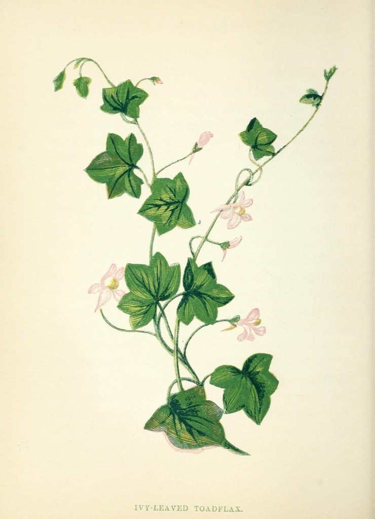 N83 w1150 wild flowers london pott young co 1857 for Botanical tattoo london