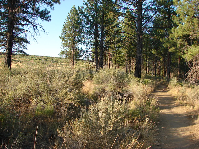 Loop Trail in Shevlin Park