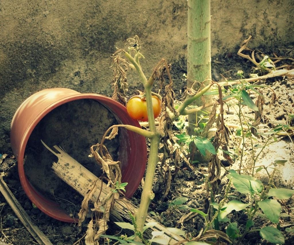 Time To Start Gardening M Alphotography Flickr