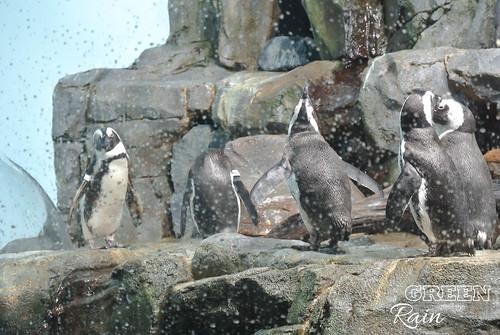 160703d Splash Zone and Penguins _21
