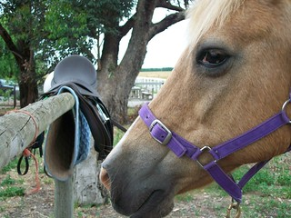 Free Riding - would you Ride without a Saddle and Bridle?