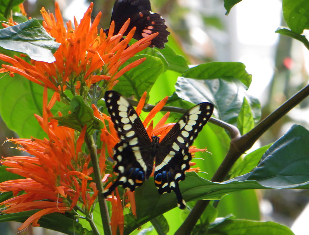 Happy Monday Another From The Butterflies Are Blooming Exh Flickr
