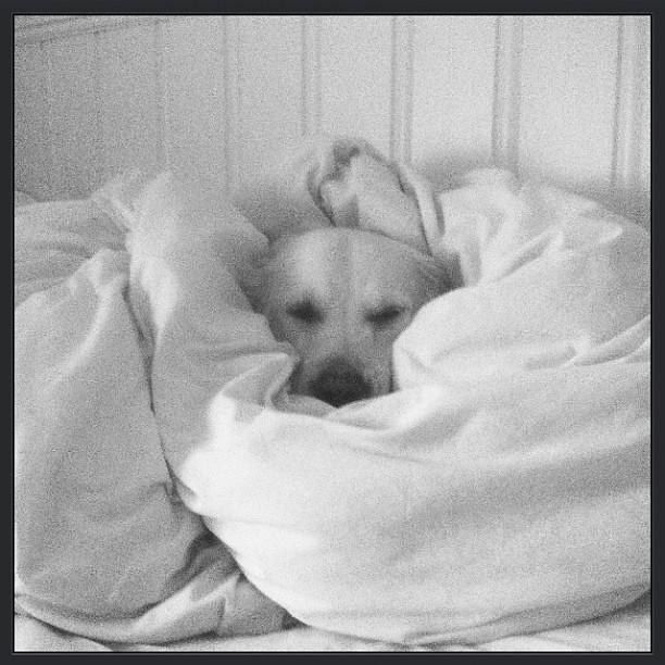 Good Morning Bestoftheday Blackandwhite Cute Dog Fun Flickr