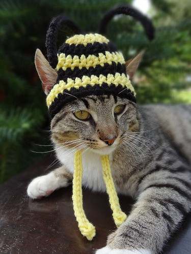 Cats In Hats | by mjb_leo