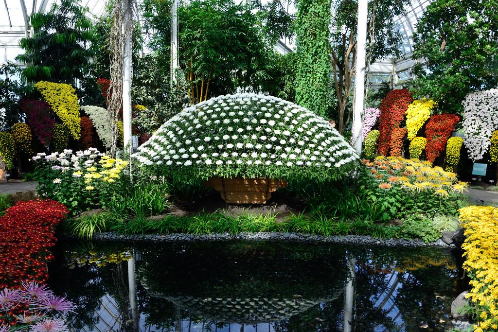 Kiku: The Art of the Japanese Chrysanthemum | Ozukuri or \