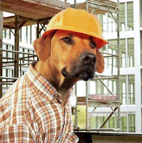 builder dog