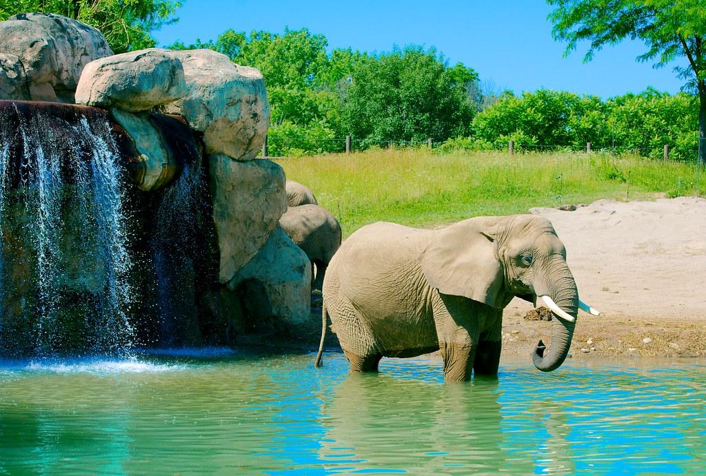 Elephant_40