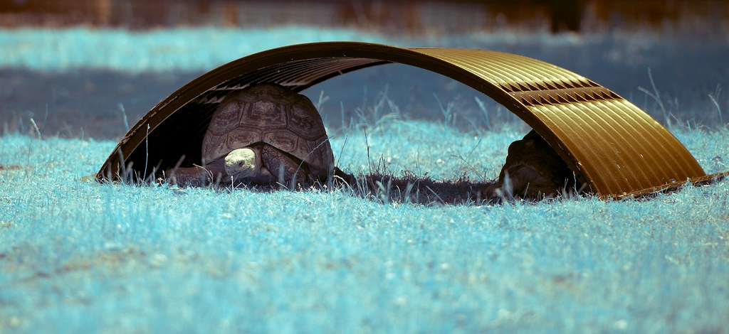 Tortoise_7