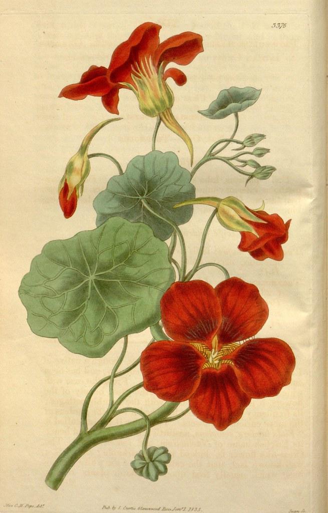 N5 W1150 Curtis S Botanical Magazine London New York