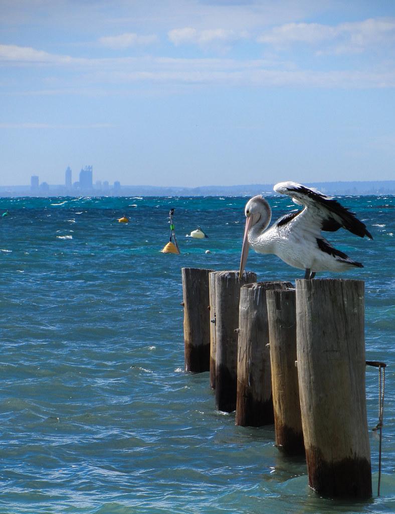Rottnest Island-5.jpg | Tomas Collins | Flickr