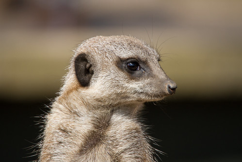Twycross Zoo | by Joanne Goldby