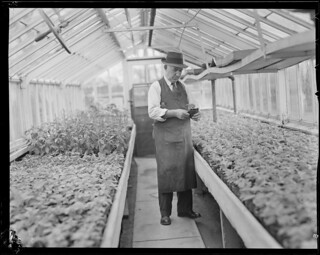Man in greenhouse Arboretum?