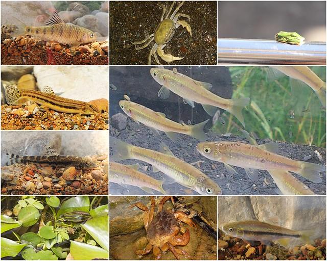 一新社區生態池調查記錄物種。圖片來源:一新社區發展協會