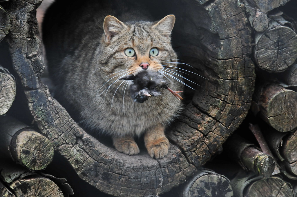 Feral cat sanctuary pa
