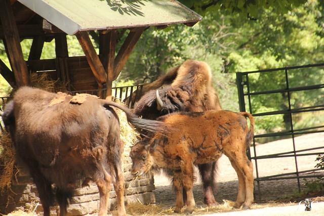 Besuch Tierpark Friedrichsfelde 20.07.201654