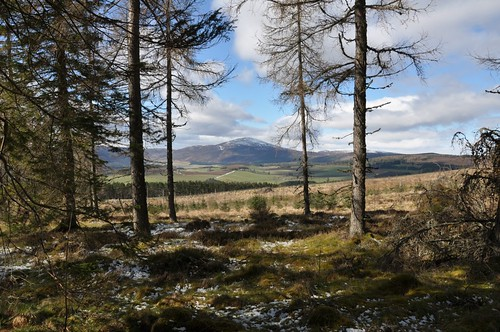 Morven from Davoch Wood